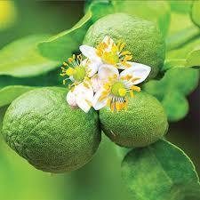 عطرهایی که اعتماد به نفس میآورند